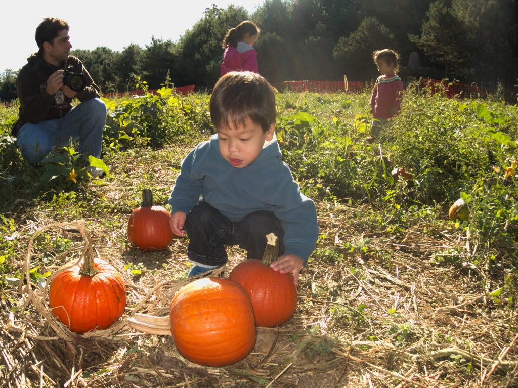 Sam inspects pumpkins