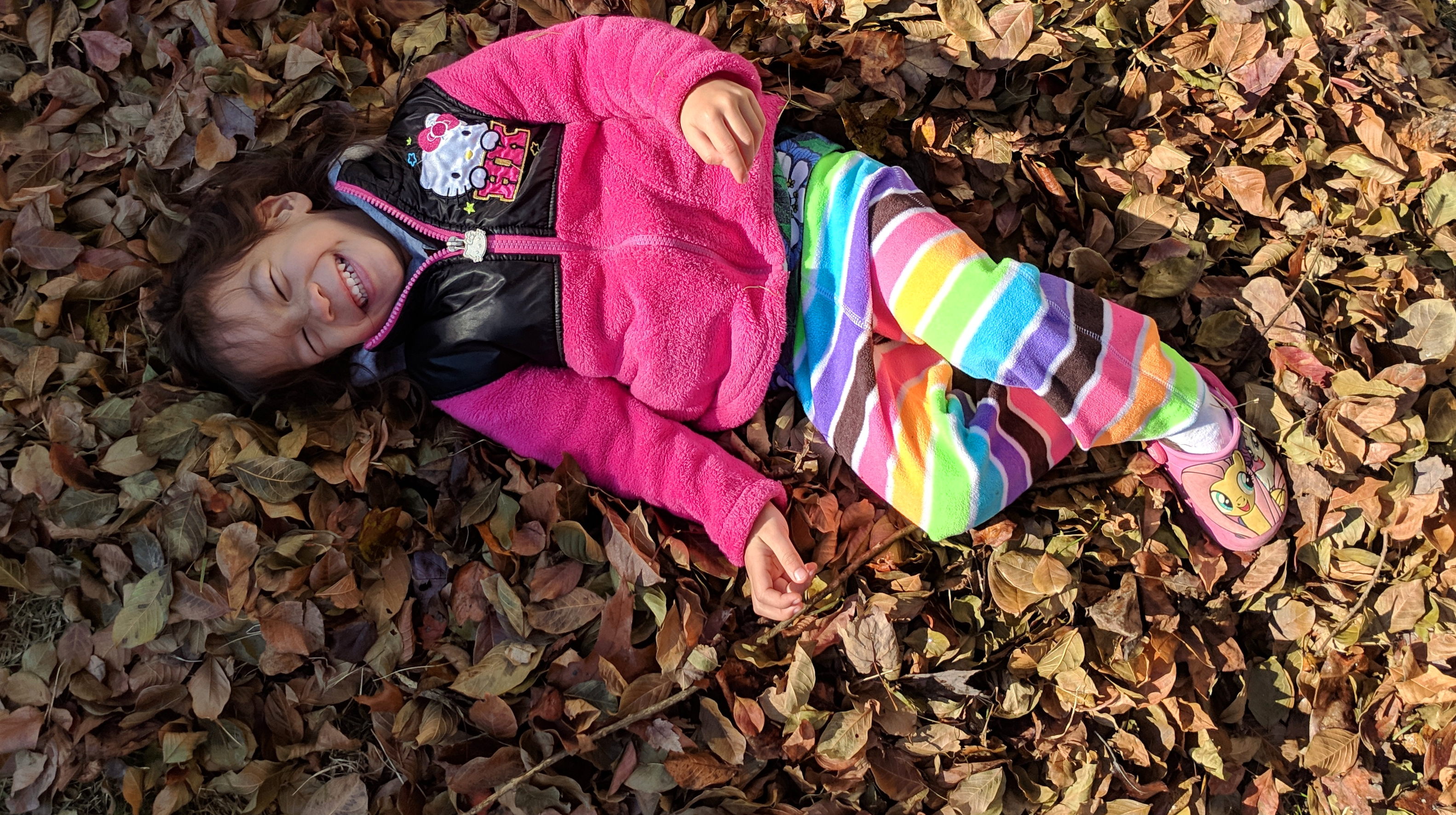 Stella in the leaves